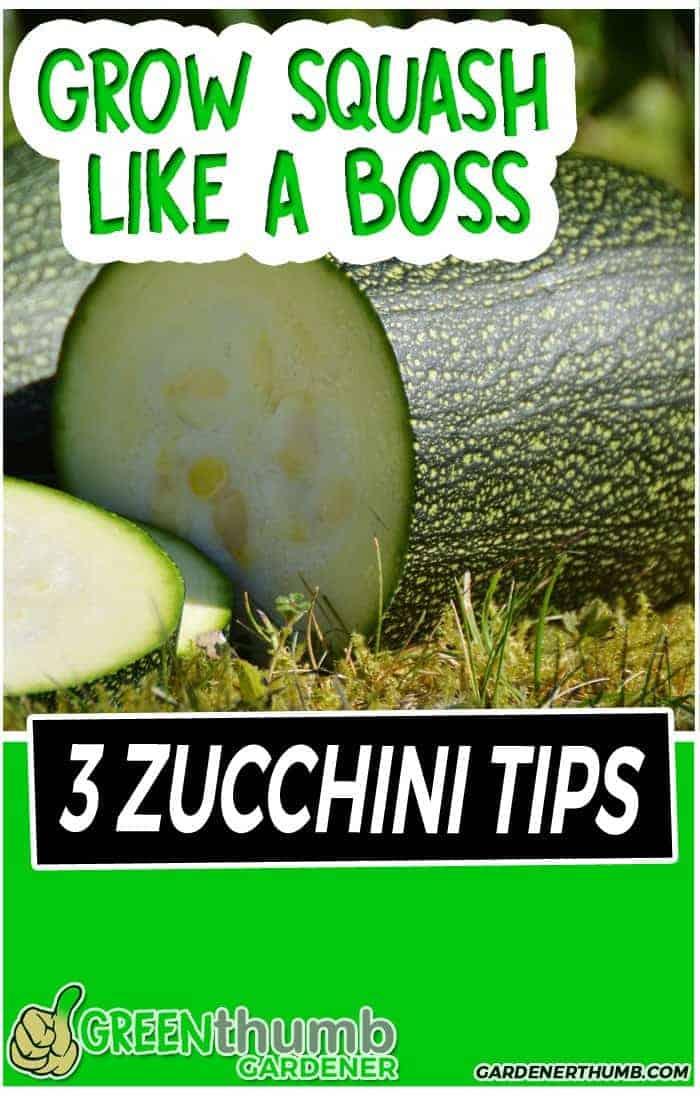 grow squash tips