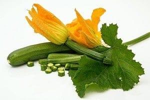 zucchini squash plant