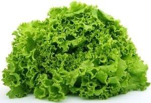 growing lettuce in pots