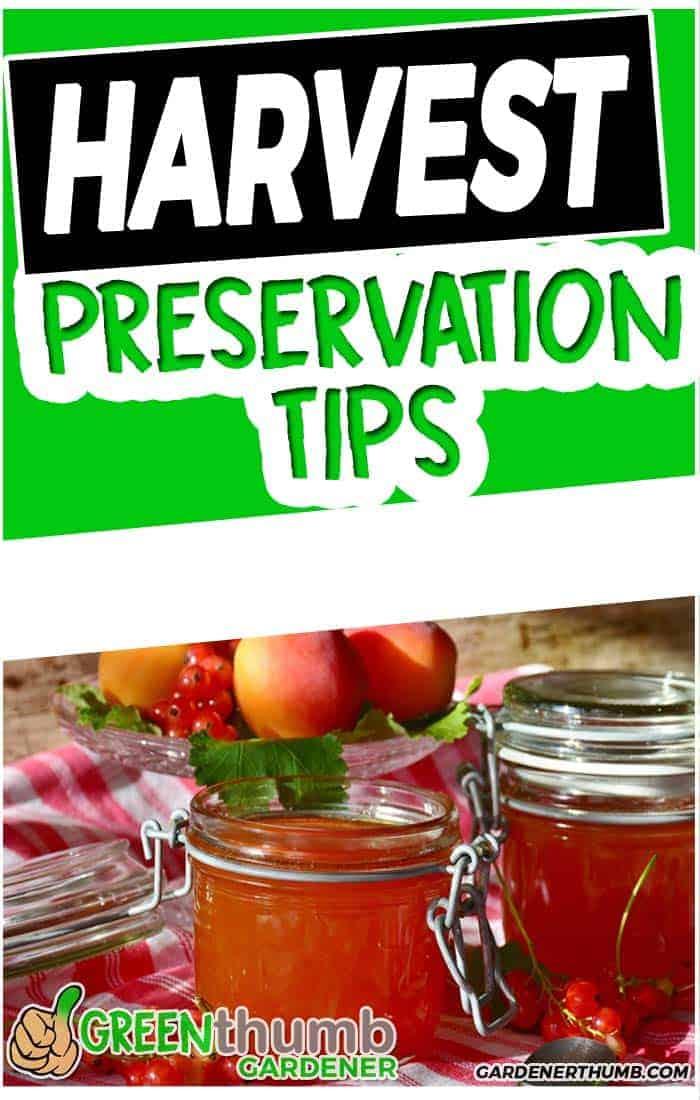 preservation tips