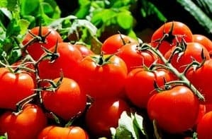 save tomato seeds