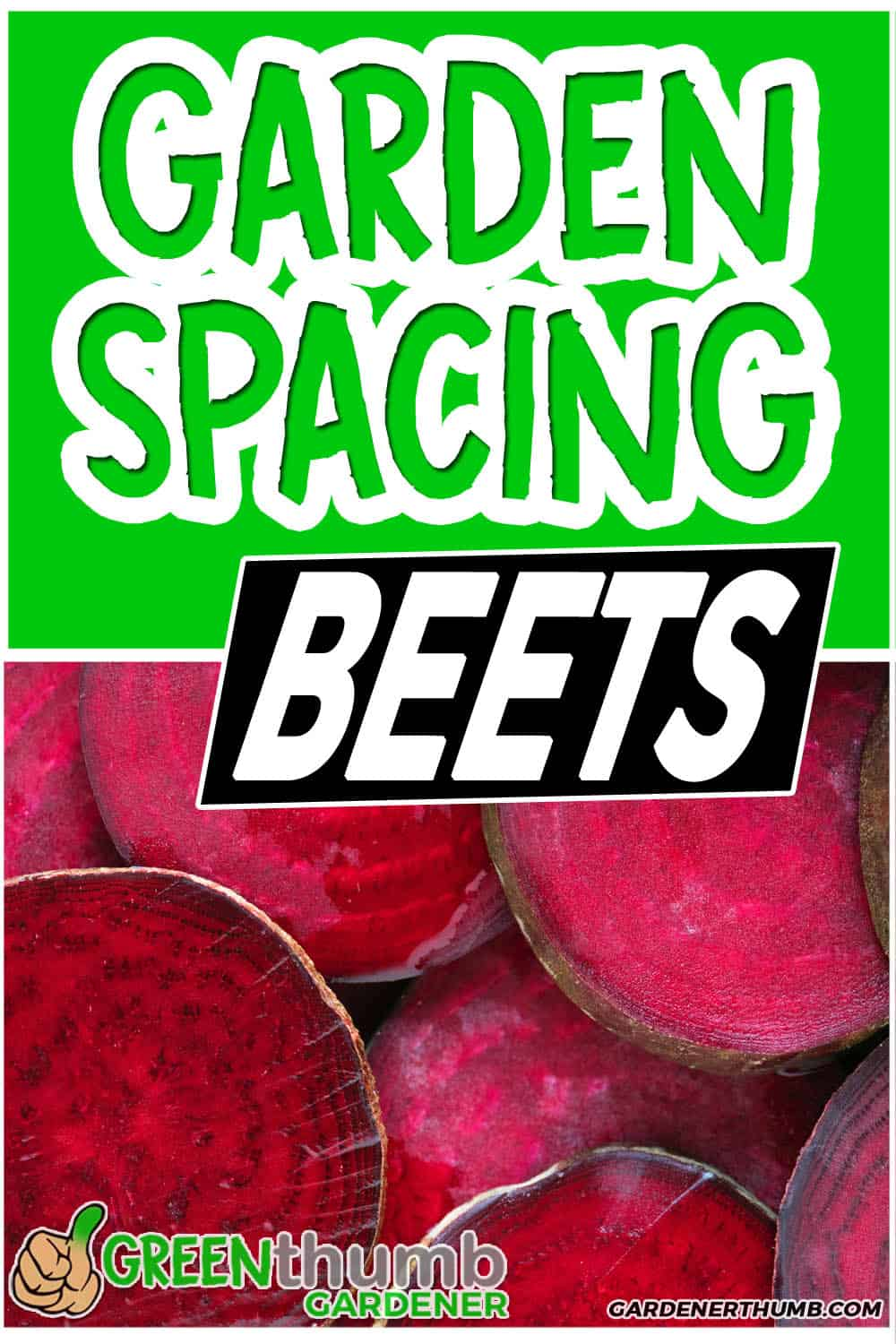 Beets Companion Plant guide