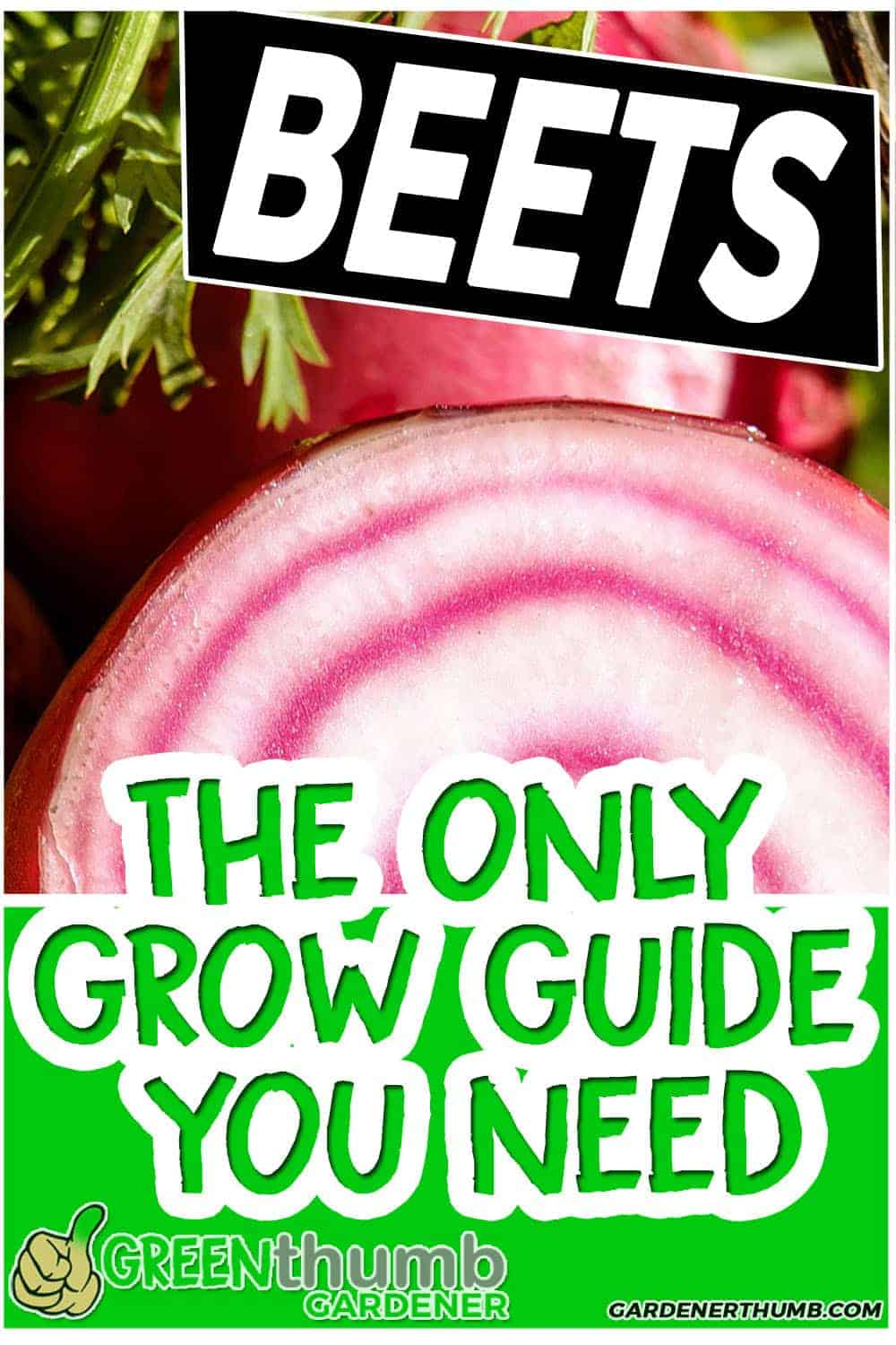 growing beets grow guide