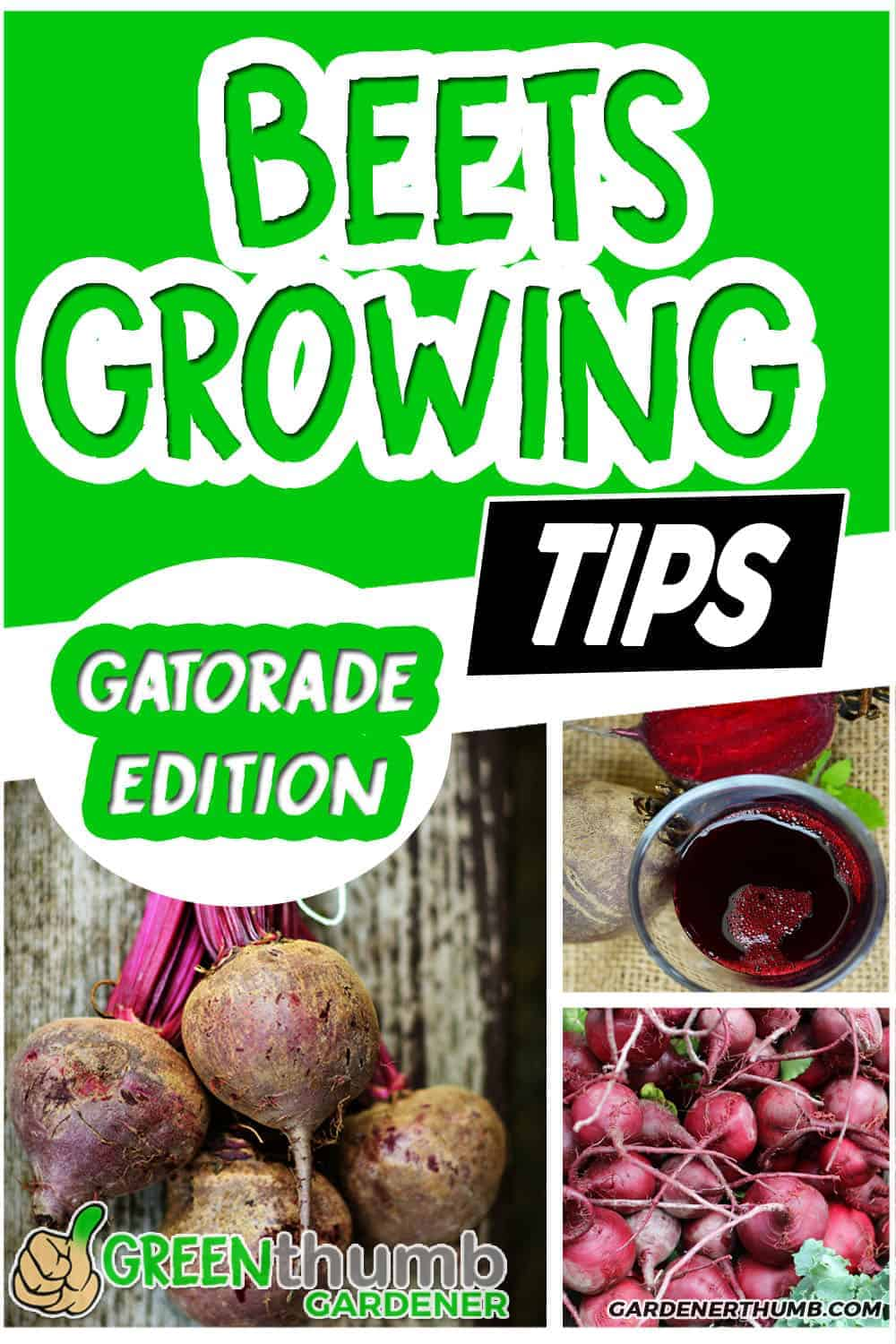 growing beets tips