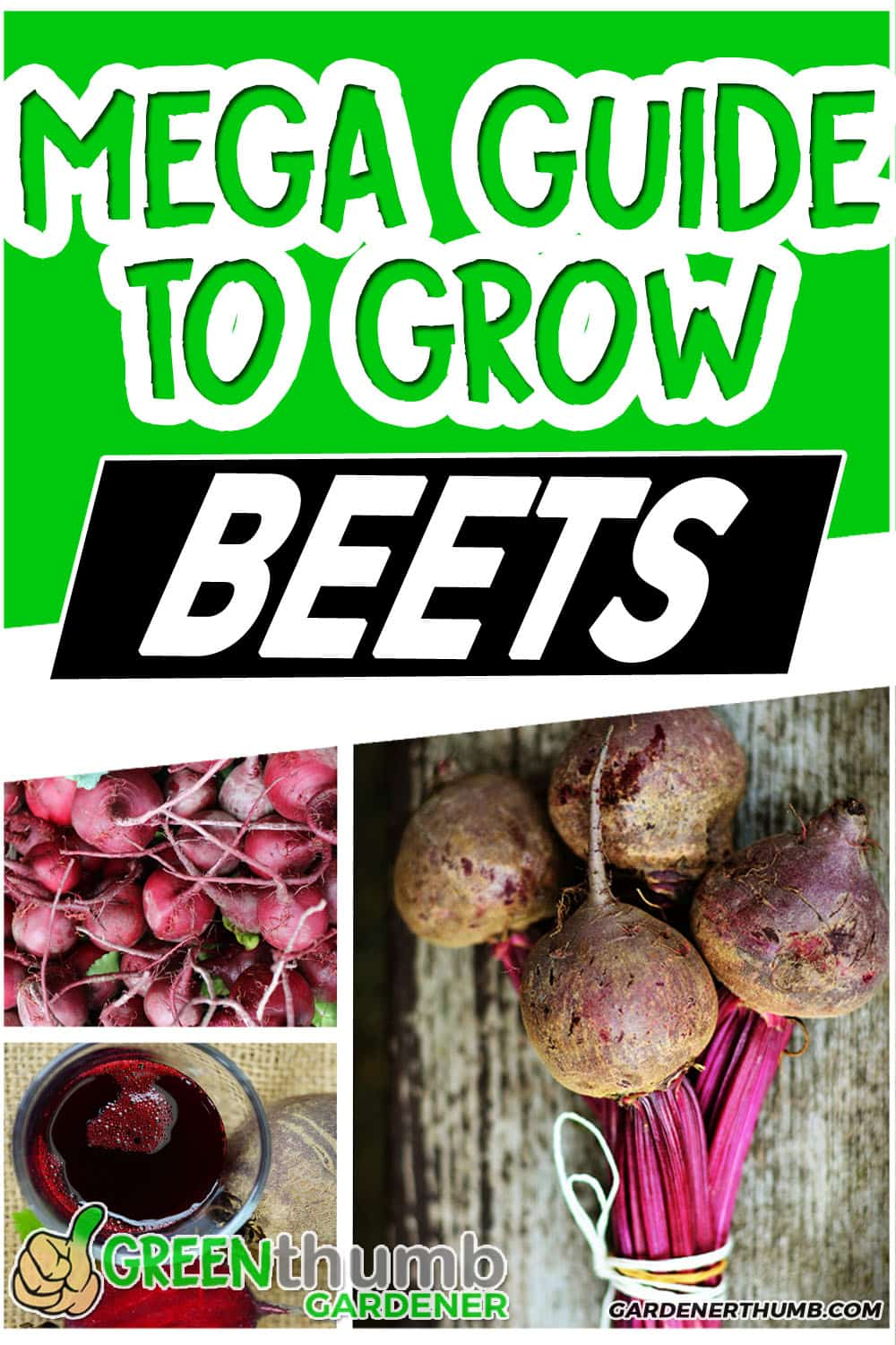 growing beets from seed