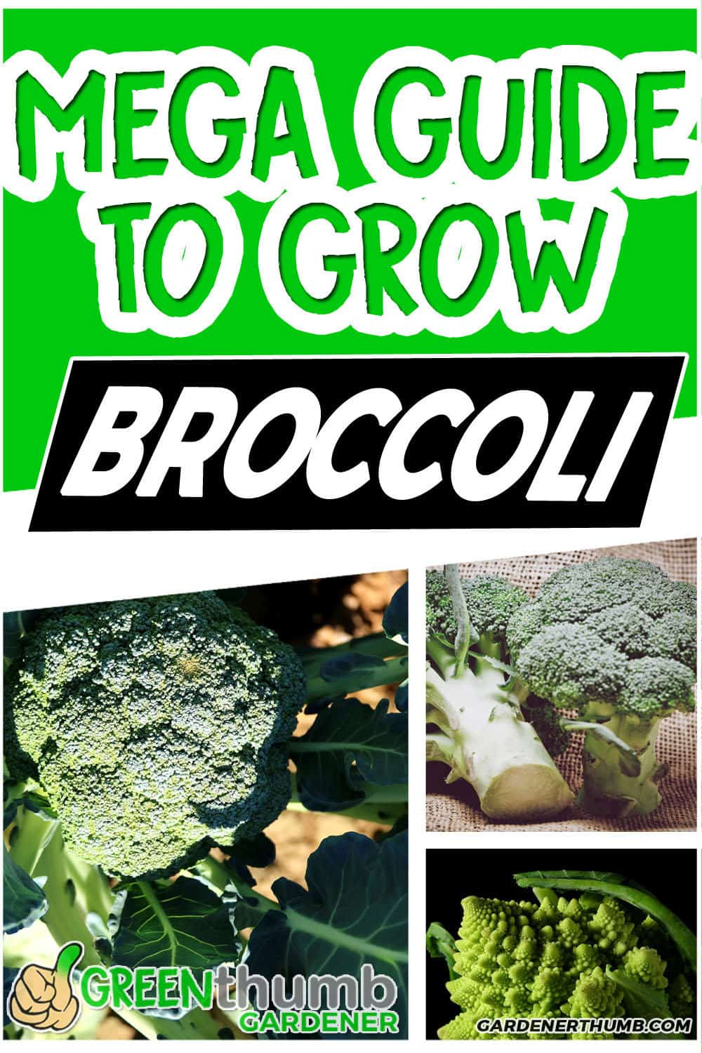 growing broccoli in containers