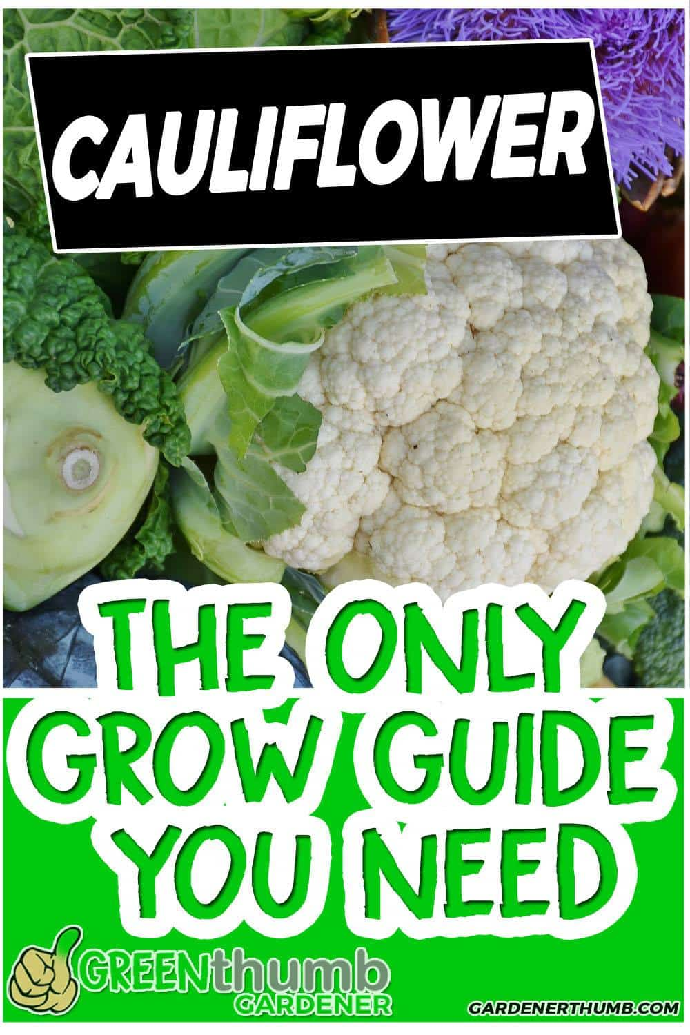 growing cauliflower from seed