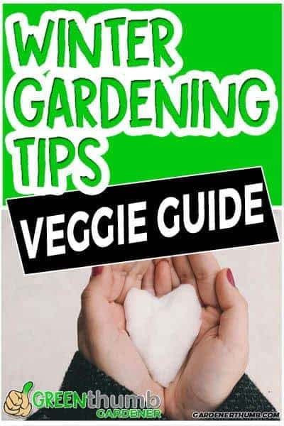 winter gardening growing tips