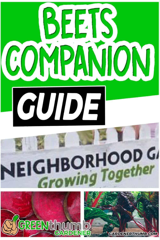 Beets Companion Planting