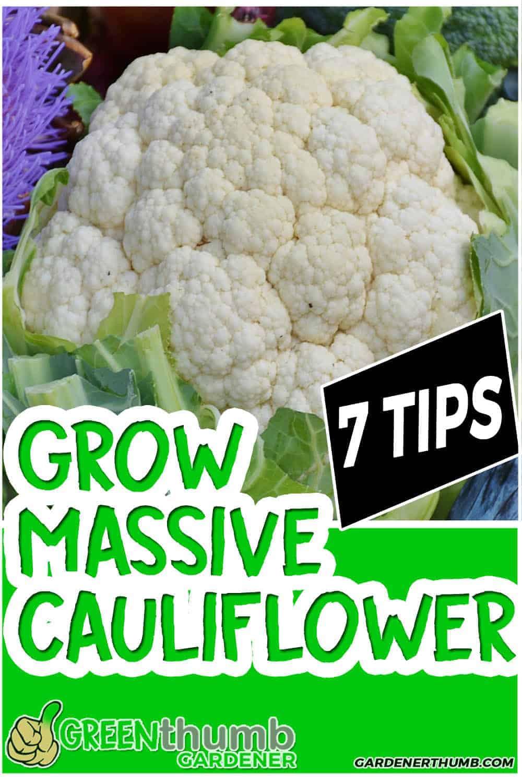 How To Grow Cauliflower