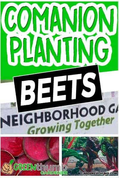 beets companion guide