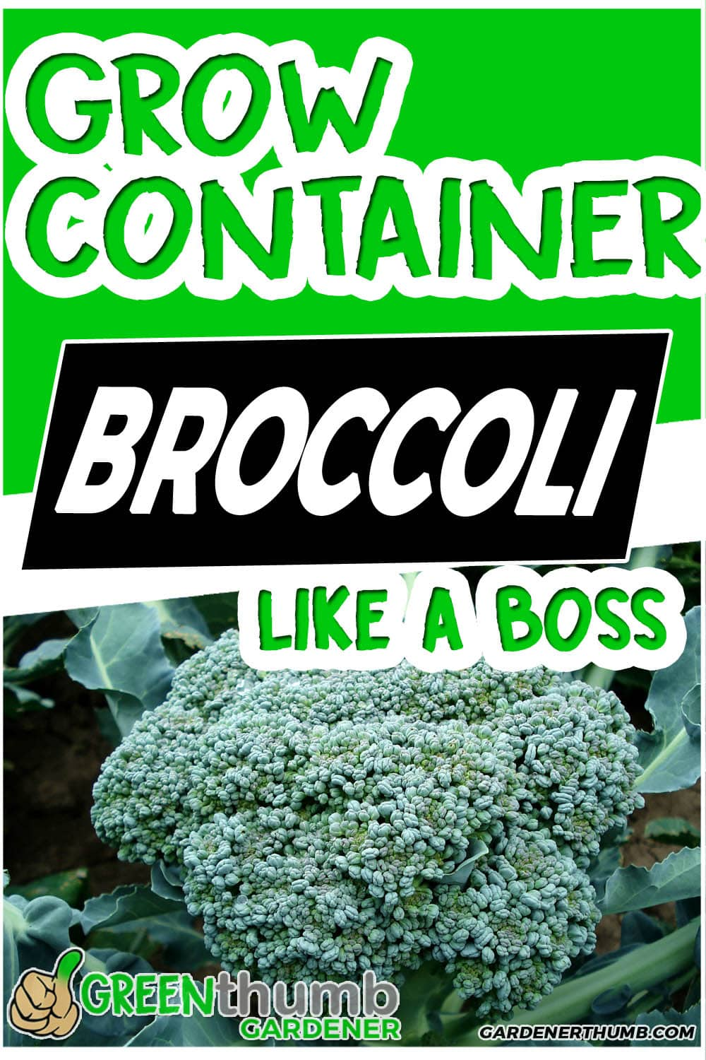 grow broccoli in containers