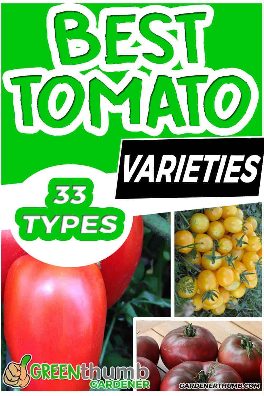 33 tomato varieities