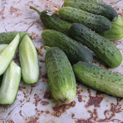 Alibi Cucumbers