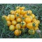 Blondkopfchen Tomato