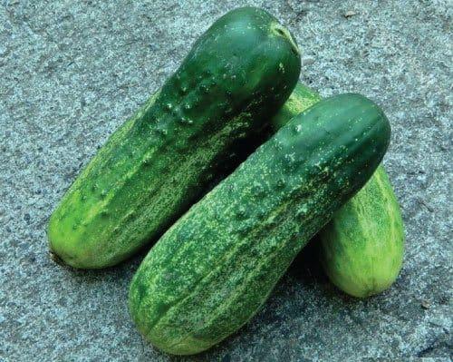 Calypso Cucumber