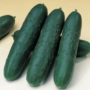 Saber Cucumber
