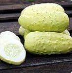 boothby blonde cucumber varieties