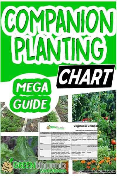 companion planting guide 01