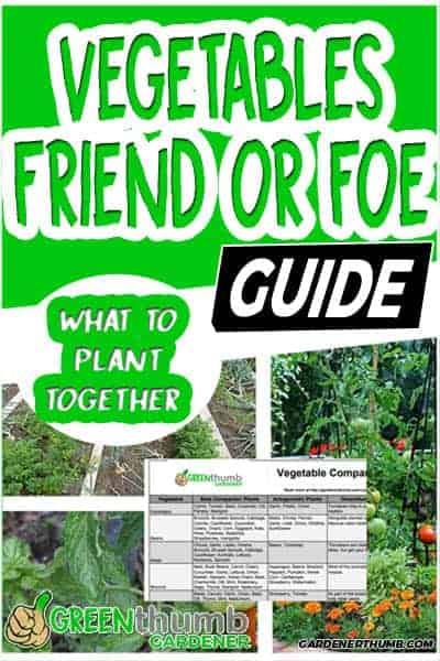 companion planting guide 02