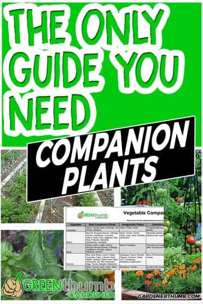 companion planting guide 03