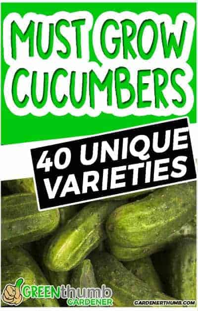 cucumber variety to grow