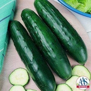 fanfare cucumber