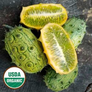 jelly melon cucumber