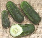 liberty cucumber varieties