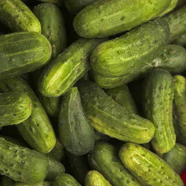 national pickling cucumber