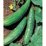 orient express cucumber varieties