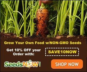 seedsnow