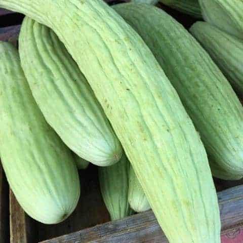 sweet armenian cucumbers