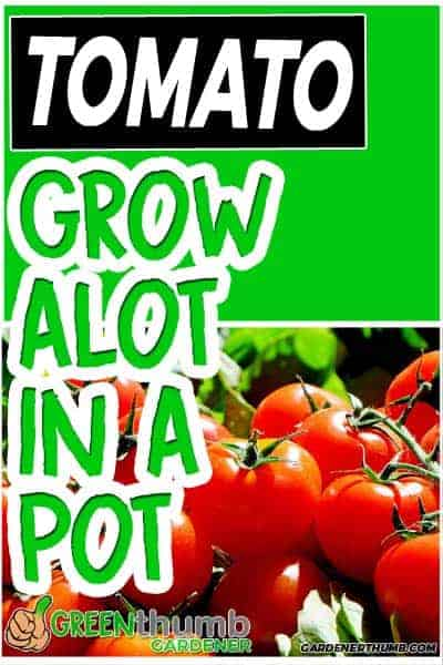 tomato growing container tips