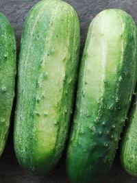 wisconsin smr 58 pickling cucumber