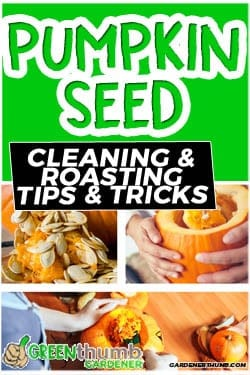 How to Separate Pumpkin Seeds from Strings