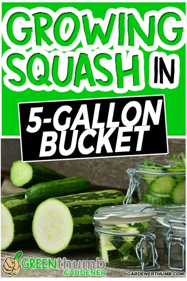Why Grow Zucchini In a 5 Gallon Bucket