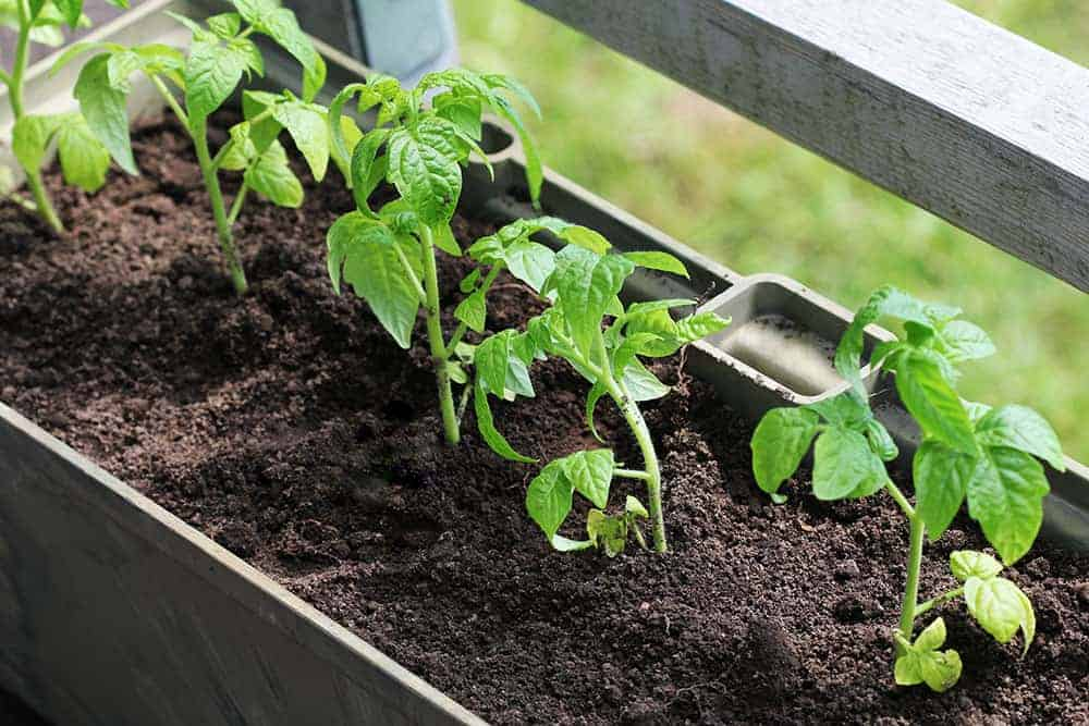 vegetable gardening container