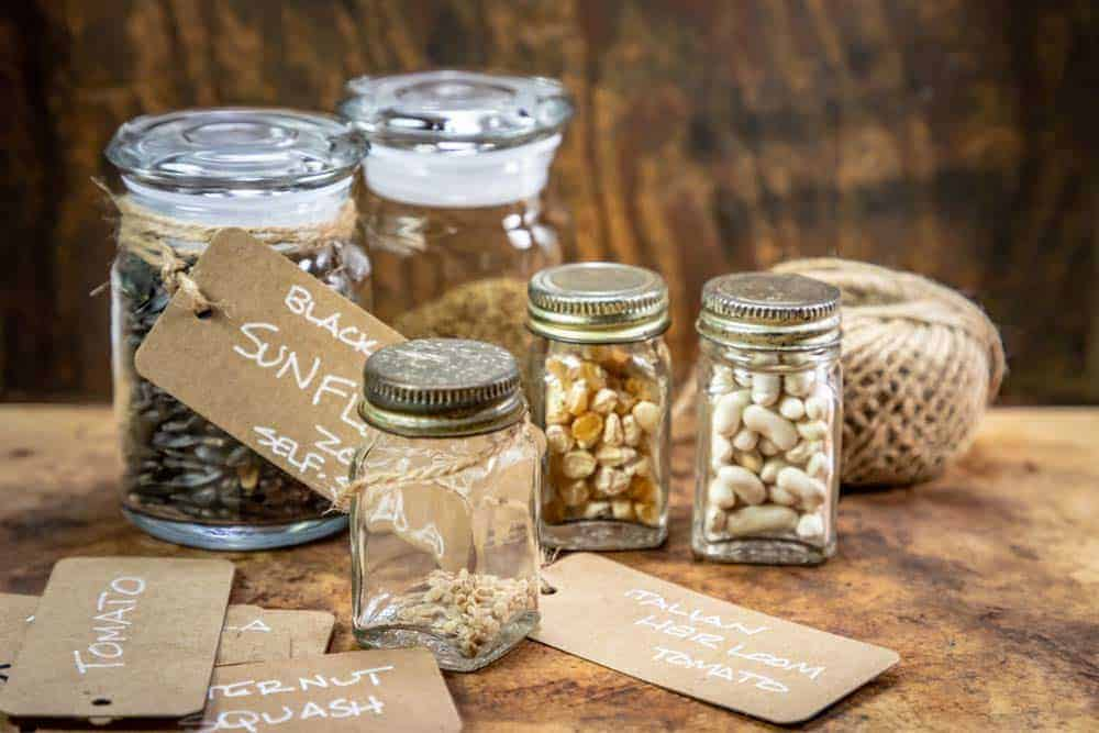 How Long Are Vegetable Seeds Good For