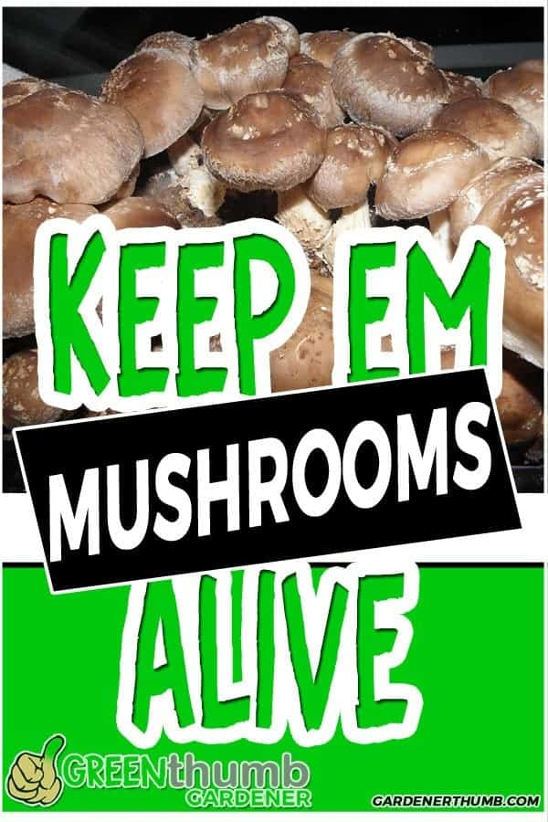 how long do mushrooms last