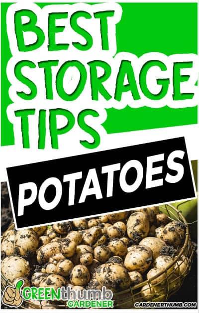 how long do potatoes last