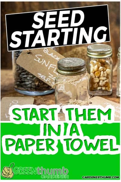 how to start from a paper towel