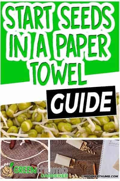 how to start from a paper towel03