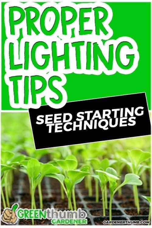 When Do I Put My Seedlings Under LIGHT