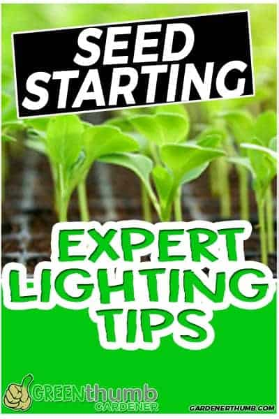 When Do I Put My Seedlings Under LIGHT