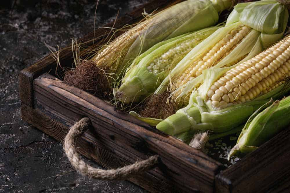 grow corn in pots
