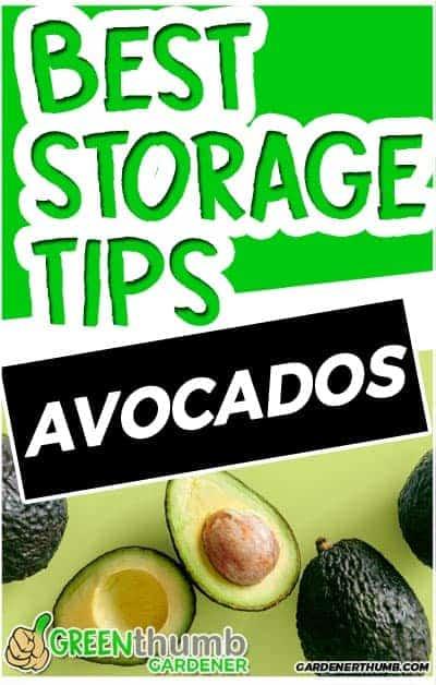 how long do avocados last