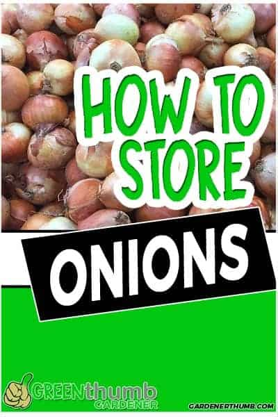 how long do onions last 01