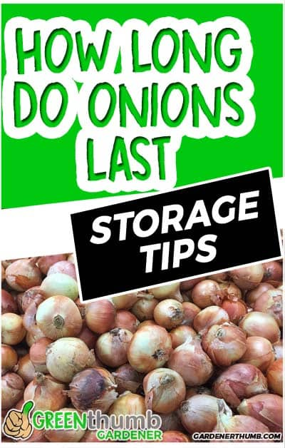 how long do onions last 03