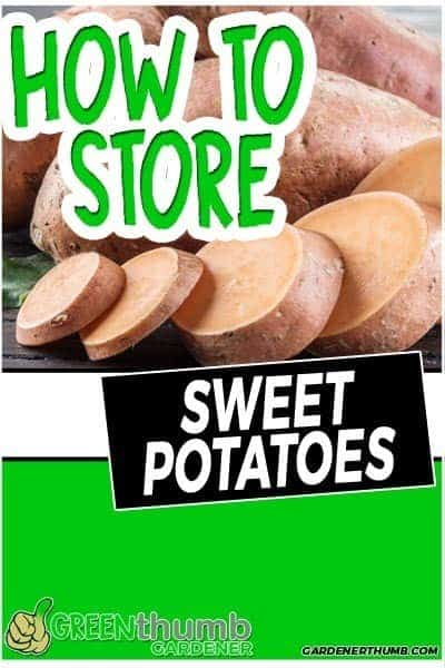 how long do sweet potatoes last